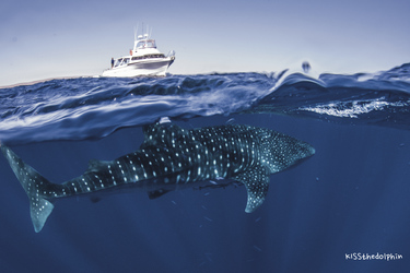 Am Ningaloo Reef ©KISSthedolphin