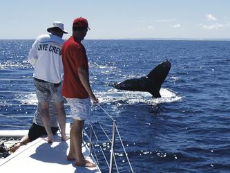 Walbeobachtung am Ningaloo Reef