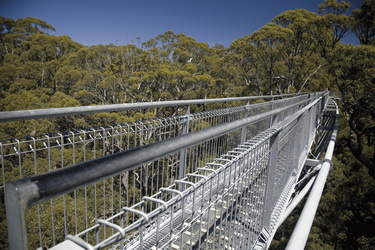 Treetop Walk, Valley of the Giants