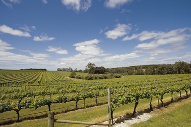Weinberge in Margaret River