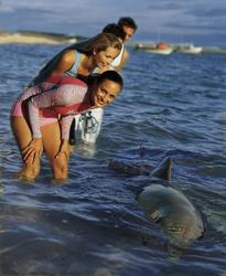 Delfin beim Monkey Mia Dolphin Resort
