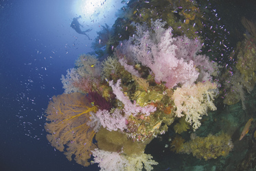 Korallewände an den Rowley Shoals