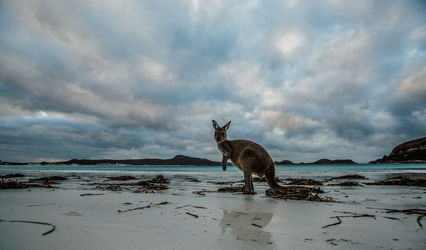 ©Greg Snell - Lucky Bay, Cape Le Grande NP