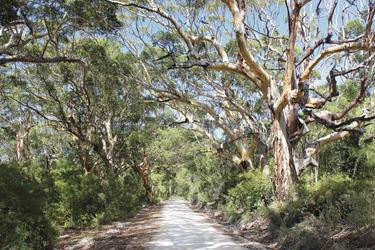 Boranup Forest nahe Margaret River