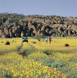 Wildblumenblüte im Outback