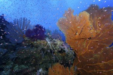 Unterwasser an den Rowley Shoals