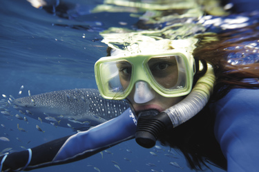 Schnorcheln mit dem Walhai (optional)