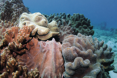 Korallenriff Ningaloo ©Gary Brennand