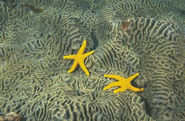 Seesterne vor Rottnest Island