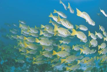 Fischschwarm vor Rottnest Island