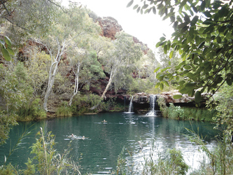 Fern Pool, Karijini Nationalpark
