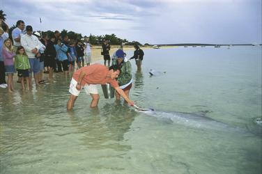 Bei der Delfinfütterung