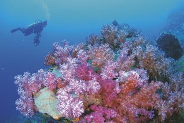 Korallen am Ningaloo Reef