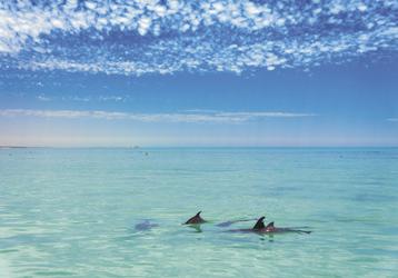 Delfinsichtung