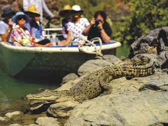 Auf Krokodilbeobachtung
