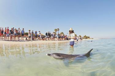 Besuch in der Dolphin Bay