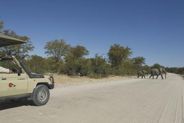 Zwei Elefanten während einer Safari in Botswana
