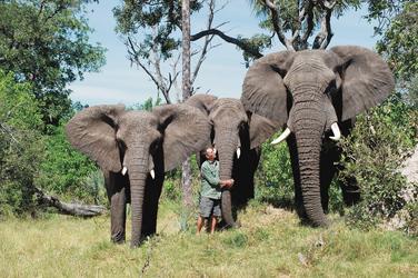 Sanctuary´s Elefanten