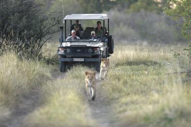 Auf Pirschfahrt, ©Letaka Safaris