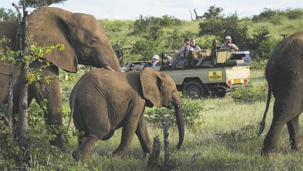 Mit Mashatu auf Safari
