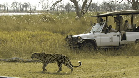 Game Drive im Moremi Game Reservat