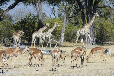 Tierbeobachtung Hyena Pan