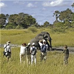 Elefanten beobachten im Moremi Game Reservat