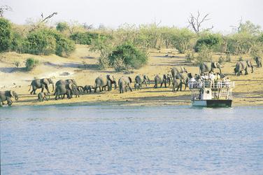 Bootssafari Chobe Fluss mit Elefantenherde