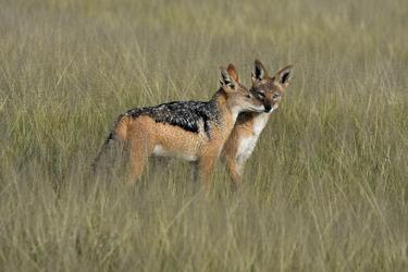 Kalahari Game Reserve