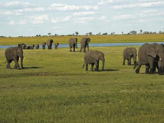 Elefantenherde im Moremi Game Reserve