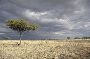 Central Kalahari Bruce Taylor, ©Bruce Taylor