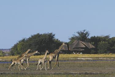 Giraffenbesuch, ©Desert & Delta