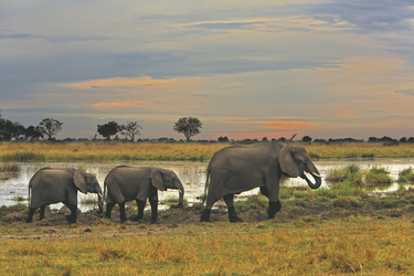 Elefanten Parade , ©Kwando Safaris