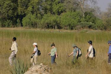 Fußwanderung durch das Okavangodelta