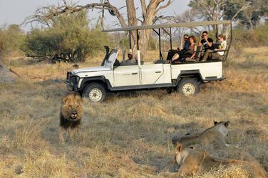 Auf Safari im Moremi Game Reserve