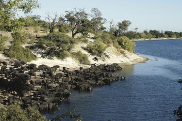 Chobe Fluss