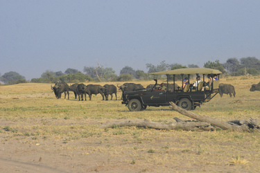 Auf Safari mit Chobe Safari Lodge