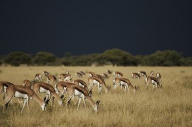 Botswana Kalahari National Park