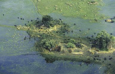 Die typischen Inseln des Okavangodeltas