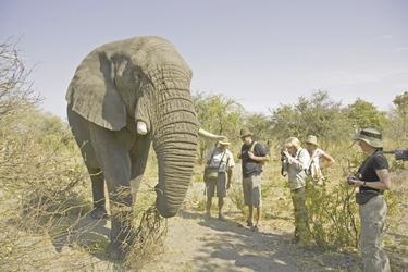 Begegnung mit Elefanten auf Sanctuary Stanleys Camp