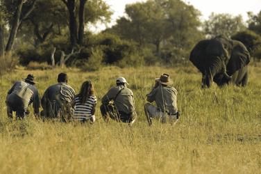 Botswana Moremi Game Reservat