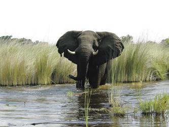 Elefant aus nächster Nähe