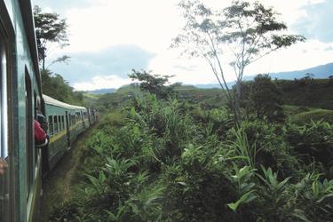 Den Regenwald durchfahren