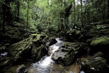 Verwunschener Regenwald