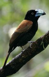 Reiche Vogelwelt