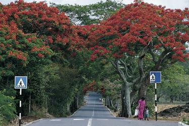 Straßenbild Mauritius