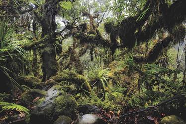 Mitten im Regenwald, ©Hervé Douris