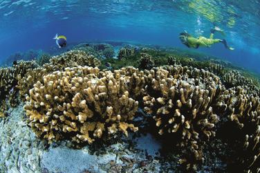 Einmalige Unterwasserwelt