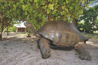 ©Copyright 2009 Bird Island Seychelles & Gregor Kervina  www.gregsi.com