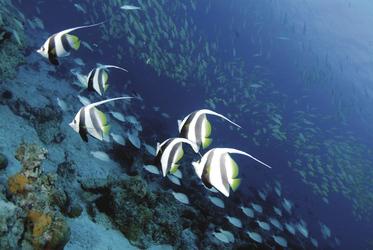 Herrliche Unterwasserwelt